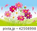 コスモス 秋桜 花のイラスト 42508998