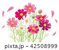 コスモス 秋桜 花のイラスト 42508999