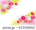 コスモス 秋桜 花のイラスト 42509002