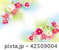 コスモス 秋桜 花のイラスト 42509004