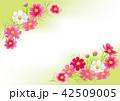 コスモス 秋桜 花のイラスト 42509005