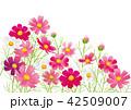 コスモス 秋桜 花のイラスト 42509007