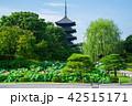 東寺 五重塔 蓮の写真 42515171