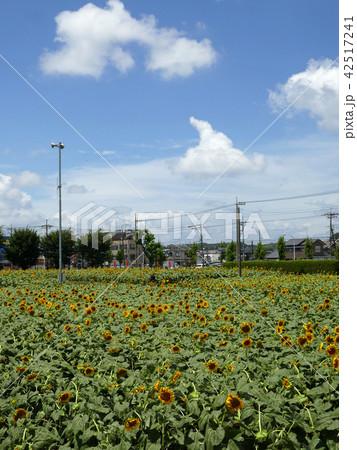 ひまわりガーデン武蔵村山 (4) 42517241