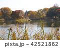 紅葉 秋 植物の写真 42521862
