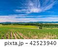 美瑛の丘 赤い屋根の家 夏の写真 42523940