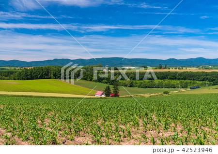 《北海道》美瑛の丘・赤い屋根の家と田園風景 42523946