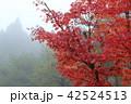 紅葉 霧 木の写真 42524513