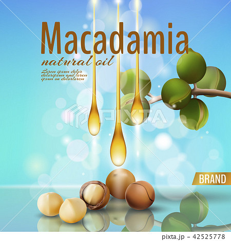 realistic 3d macadamia nut oil cosmetic shell ad template branch