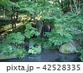 薬師池公園 42528335
