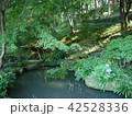 薬師池公園 42528336