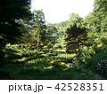薬師池公園 42528351