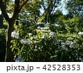 薬師池公園 42528353