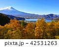 河口湖 富士山 秋の写真 42531263