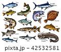 サカナ 魚 魚類のイラスト 42532581