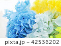 ドライフラワー(紫陽花) 42536202