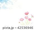 水彩 青空と秋桜 42536946