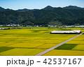 田んぼ 風景 秋の写真 42537167