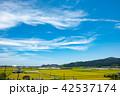 田んぼ 風景 秋の写真 42537174