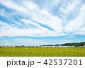 田んぼ 風景 秋の写真 42537201