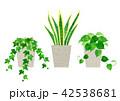 観葉植物 セット(アイビー、サンスベリア、ポトス) 42538681