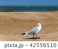ビーチ 鳥 海の写真 42556510