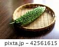 ゴーヤ 野菜 ニガウリの写真 42561615