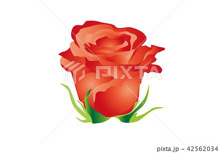 都道府県の花シンプル茨城バラ 42562034
