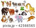A Set of Wild Animals on White Background 42566565