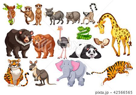 a set of wild animals on white backgroundのイラスト素材 42566565