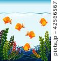 サカナ 魚 魚類のイラスト 42566567