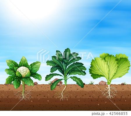 A set of organic plants 42566855
