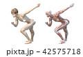 筋肉 解剖 女性のイラスト 42575718