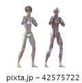 筋肉 解剖 女性のイラスト 42575722