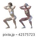 筋肉 解剖 女性のイラスト 42575723
