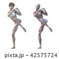 筋肉 解剖 女性のイラスト 42575724