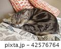 とら次郎 成猫1 42576764