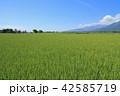 風景 安曇野 田園の写真 42585719