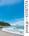 伊良湖岬 夏 海の写真 42587374