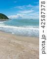 伊良湖岬 夏 海の写真 42587378