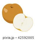 梨 果物 フルーツのイラスト 42592005
