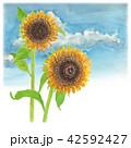 花 ひまわり 向日葵のイラスト 42592427