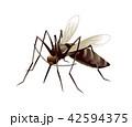 蚊のイラスト 42594375