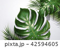 エキゾチック 葉 リーフのイラスト 42594605