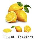 シトラス 柑橘 柑橘系のイラスト 42594774