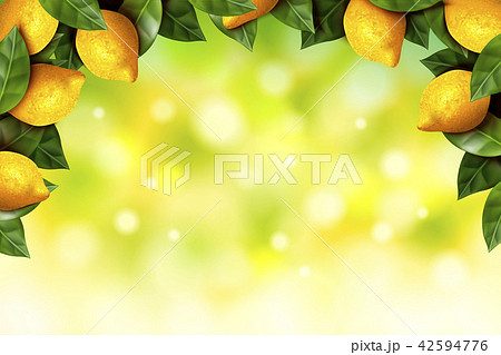 Lemon orchard frame 42594776