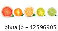 くだもの フルーツ 実のイラスト 42596905