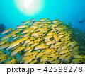 熱帯魚 海中 水中の写真 42598278