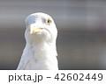 カモメ 42602449