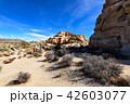 アメリカ・ジョシュア・ツリー国立公園の奇岩群 42603077